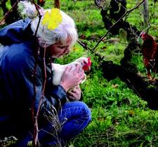 In Femina et vino veritas -  Les femmes dans l'univers du vin